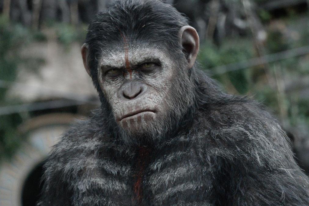 C'est pas à un vieux singe ...